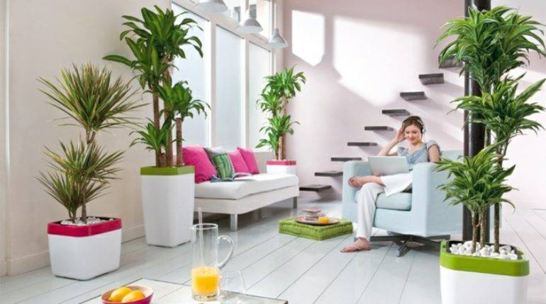 Beautiful Indoor Plants Decorate Your Home Decor